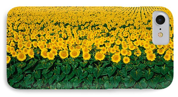 Sunflower Field, Maryland, Usa IPhone Case by Panoramic Images