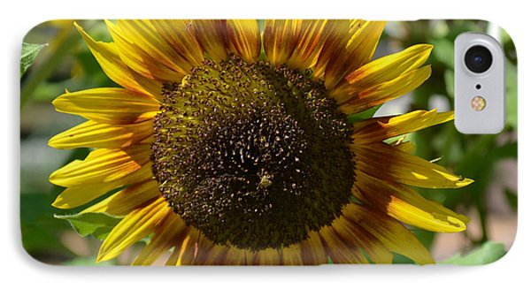 Sunflower Glory IPhone Case by Luther Fine Art