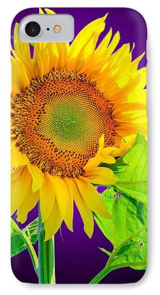 Sunflower Glow IPhone Case by Brian Stevens