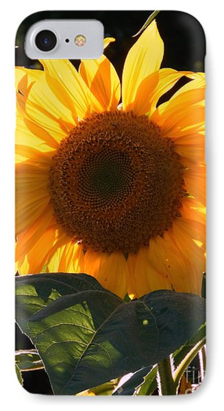 IPhone Case featuring the photograph Sunflower - Golden Glory by Janine Riley