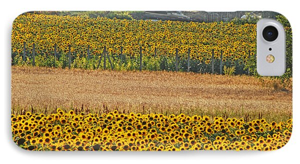 Sunflower Heaven IPhone Case by Ankya Klay