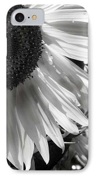 Sunflower In Black And White IPhone Case by Amy Williams