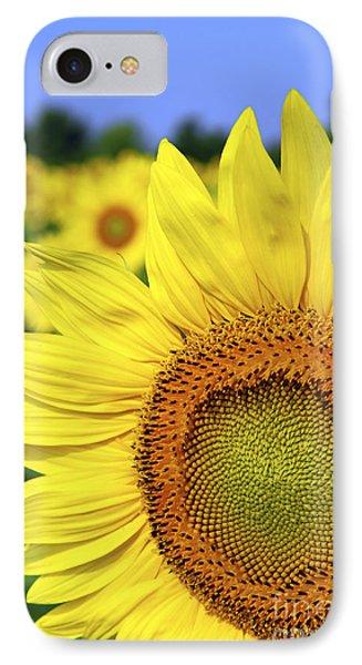 Sunflower In Field IPhone Case by Elena Elisseeva