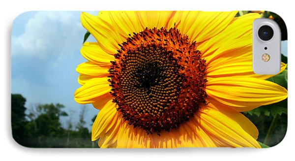 Sunflower In Summer IPhone Case