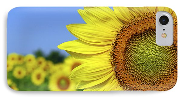 Sunflower In Sunflower Field IPhone Case by Elena Elisseeva