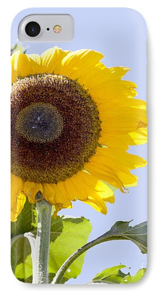 Sunflower In The Blue Sky IPhone Case by David Millenheft