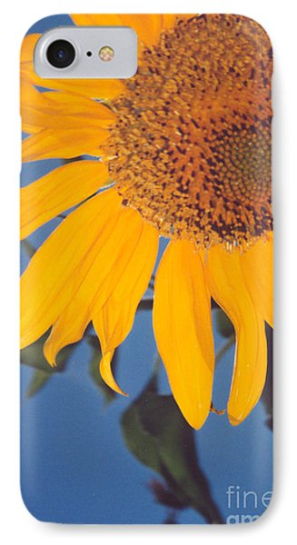Sunflower In The Corner Phone Case by Heather Kirk