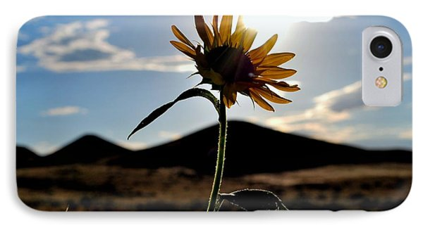 IPhone Case featuring the photograph Sunflower In The Sun by Matt Harang