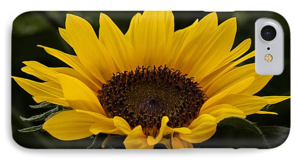 IPhone Case featuring the photograph Sunflower by Inge Riis McDonald