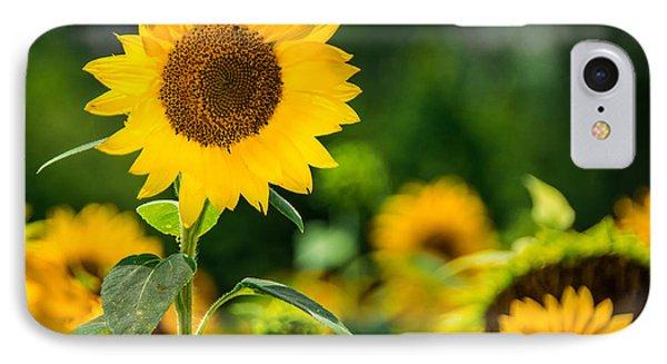 Sunflower IPhone Case by Jon Woodhams