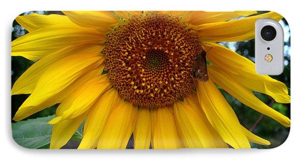IPhone Case featuring the photograph Sunflower by Kara  Stewart