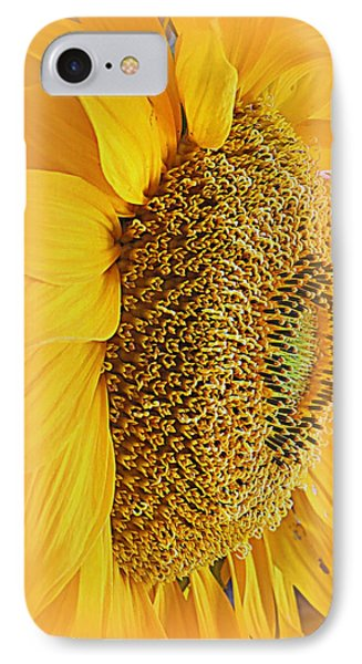 Sunflower IPhone Case by Kay Novy