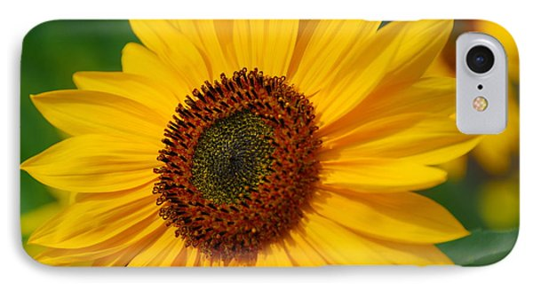Sunflower IPhone Case by Michele Wright