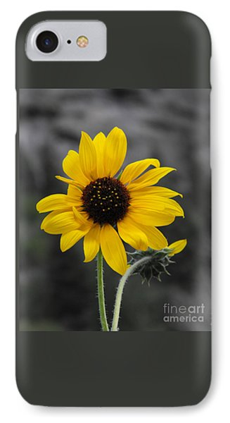 Sunflower On Gray IPhone Case by Rebecca Margraf