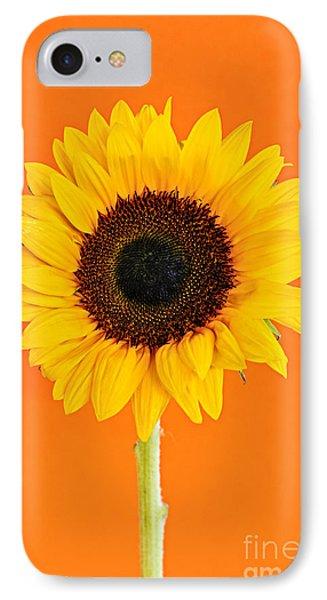 Sunflower On Orange IPhone Case by Elena Elisseeva