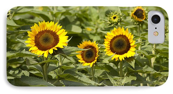 Sunflower Patch Phone Case by Bill Cannon