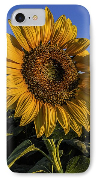 IPhone Case featuring the photograph Sunflower by Rob Graham