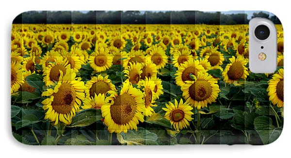 Sunflower Squared IPhone Case by Kathy Churchman