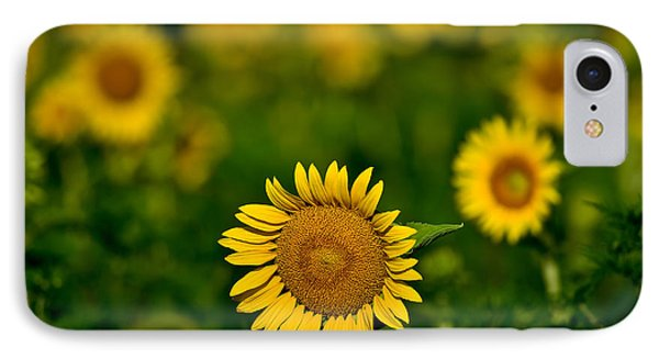 Sunflower Summer Phone Case by Christopher L Nelson