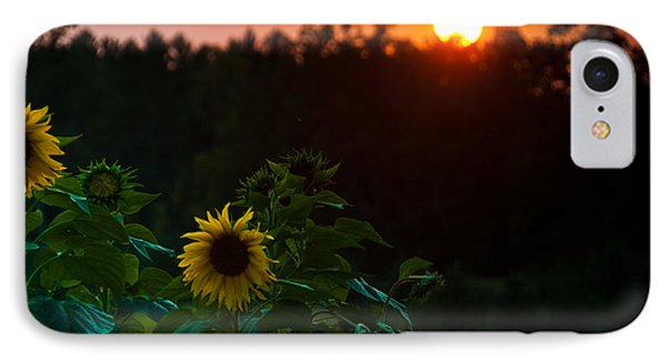 IPhone Case featuring the photograph Sunflower Sunset by Cheryl Baxter
