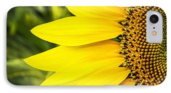 Sunflower Sunshine IPhone Case by Steven Bateson