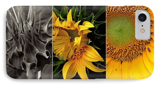 Sunflower-triptych IPhone Case by Don Spenner