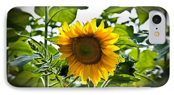 Sunflower Vignette Edges Phone Case by Ms Judi
