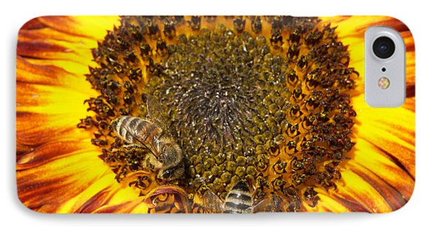 Sunflower With Bees IPhone Case by Matthias Hauser