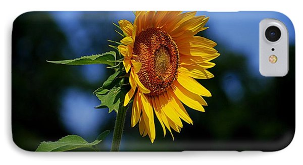 Sunflower With Honeybee IPhone Case by Catherine Sherman