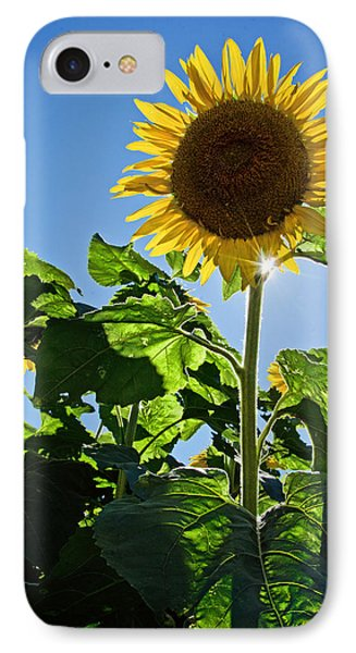 Sunflower With Sun Phone Case by Donna Doherty