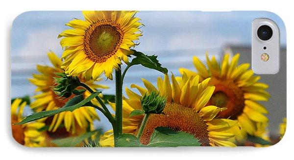 Sunflowers 1 2013 IPhone Case