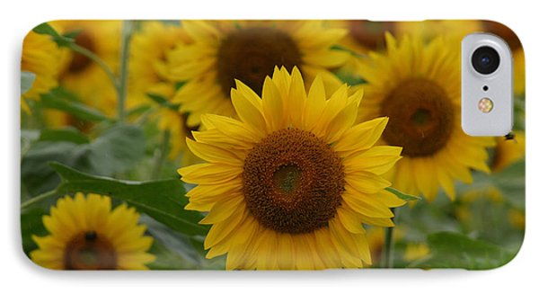 Sunflowers At The Farm IPhone Case
