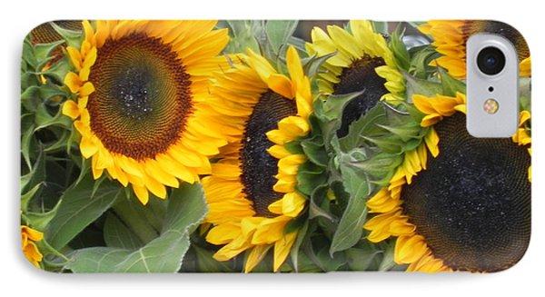 Sunflowers  IPhone Case by Chrisann Ellis
