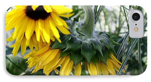 Sunflowers IPhone Case by Denise Pohl