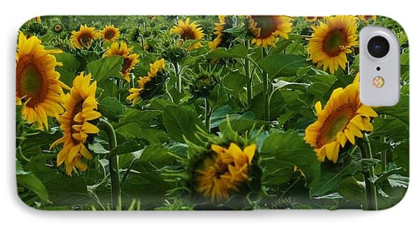 Sunflowers Galore Phone Case by Bruce Bley