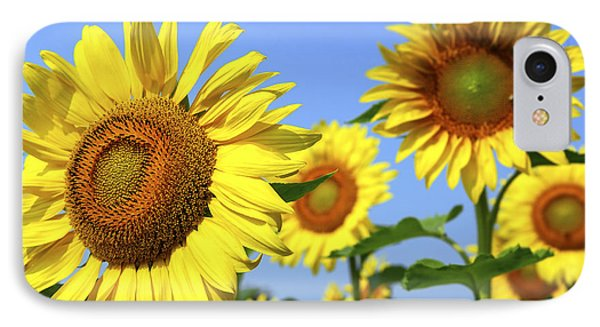 Sunflowers In Field Phone Case by Elena Elisseeva