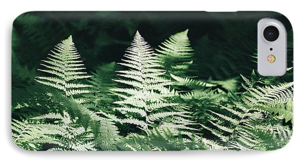IPhone Case featuring the photograph Sunlight And Shadows-algonquin Ferns by David Porteus