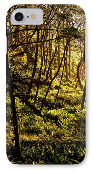 Sunlight On Fern Plants Growing In IPhone Case by Panoramic Images