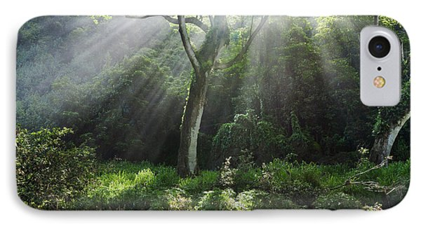 Sunlight Rays Through Trees Phone Case by M Swiet Productions