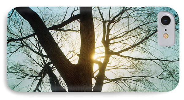 Sunlight Shining Through A Bare Tree IPhone Case by Panoramic Images