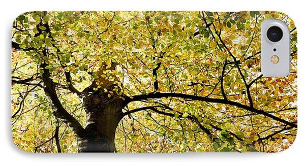Sunlit Autumn Tree Phone Case by Natalie Kinnear