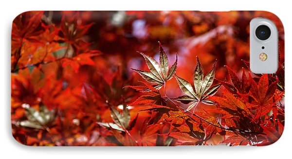 Sunlit Japanese Maple IPhone Case