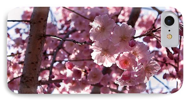 Sunlit Cherry Blossoms IPhone Case