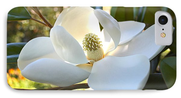 Sunlit Southern Magnolia IPhone Case by Carol Groenen