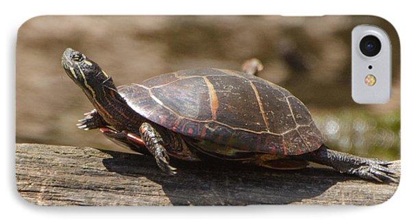 Sunning Turtle IPhone Case