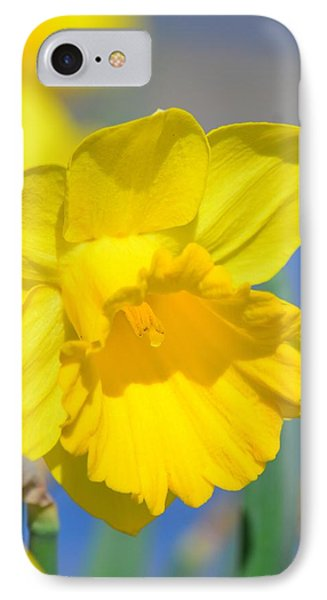 Sunny Days Of The Daffodil Phone Case by Maria Urso