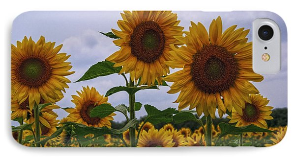 IPhone Case featuring the photograph Sunny Faces by Debra Fedchin