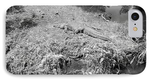 IPhone Case featuring the photograph Sunny Gator Black And White by Joseph Baril