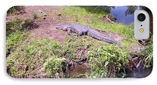 IPhone Case featuring the photograph Sunny Gator  by Joseph Baril