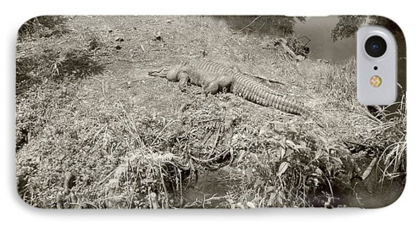 IPhone Case featuring the photograph Sunny Gator Sepia  by Joseph Baril